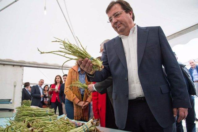 Vara en la Feria del Espárrago y la Tagarnina en Alconchel