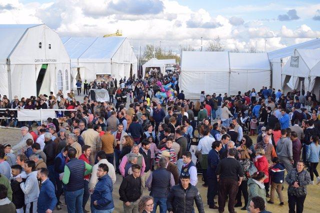 La XXIV Feria Agroganadera y de la Gastronomía de Los Palacios y Villafranca