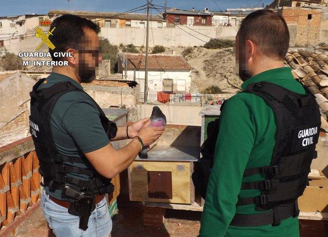 Guardia Civil detiene a cinco jóvenes por robar más de medio centenar de palomos