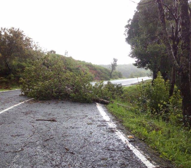 Árbol caído por el temporal de viento