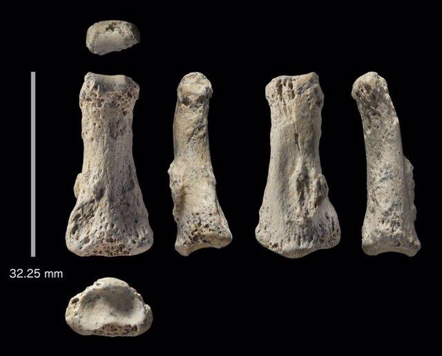 Palaeodeserts project, human bone, phalanx