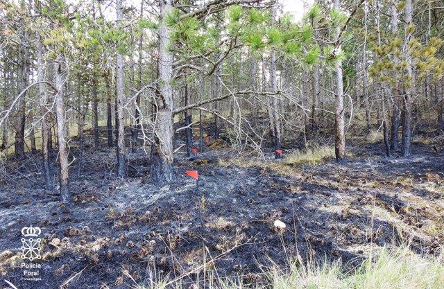 Parte de la superficie quemada con afección al pinar.