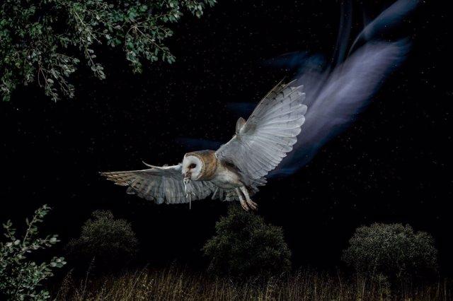 Reina de la noche, primer premio del X concurso Fotoaves de SEO/BirdLife