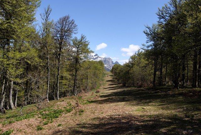 Hábitat del urogallo cantábrico en el Parque Nacional de Picos de Europa