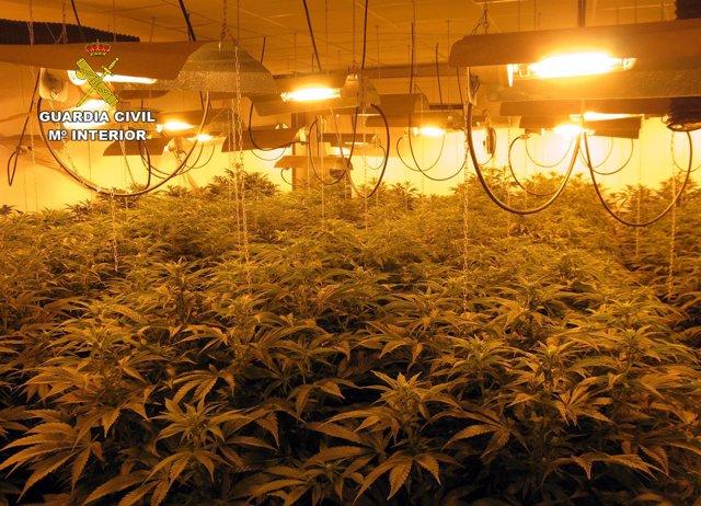 Invernadero indoor de marihuana