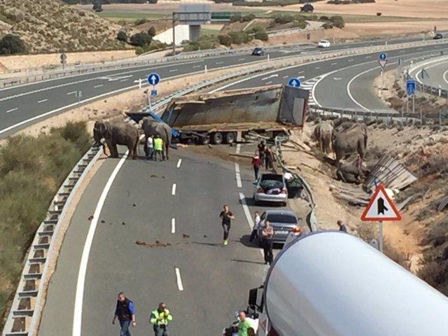 Elefantes accidentados en la A-30