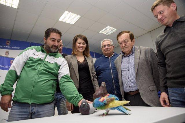 El Campeonato de España de Palomos Deportivos se celebra en Albox este mes.