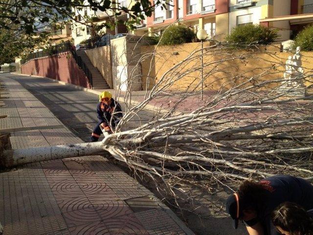 Protección Civil en Totana retiran árboles y restos de arbolado por el viento