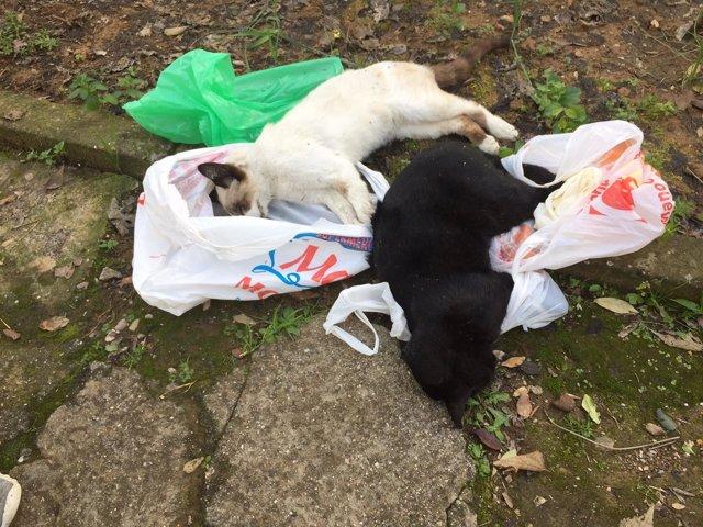 Dos de los gatos envenenados en Fátima