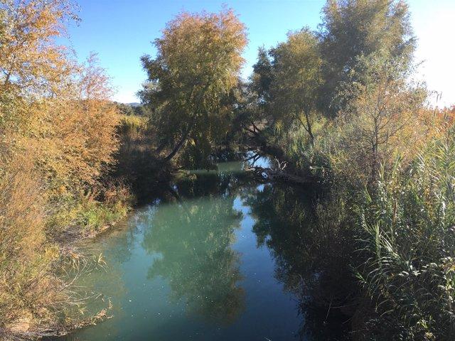 Río a su paso por el Segura