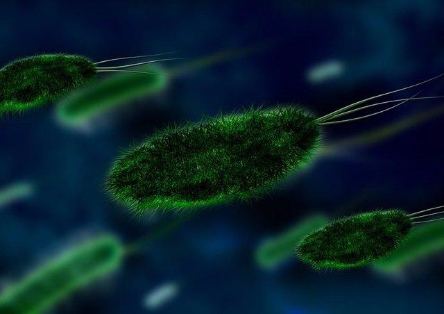 Tuberculosis, bacteria