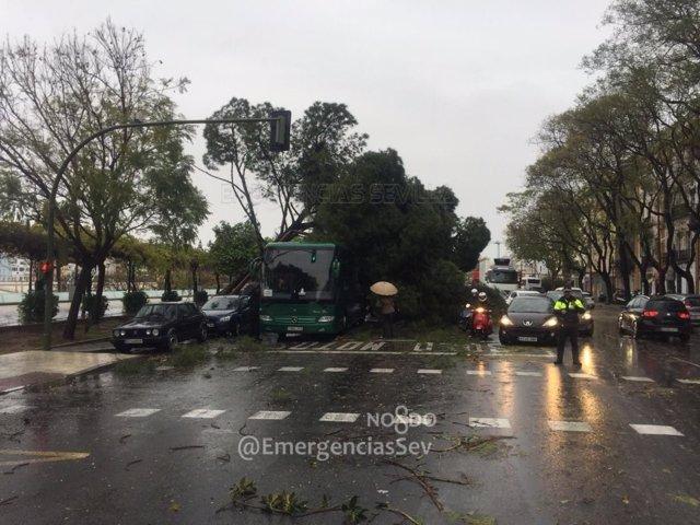 Un árbol caído en el Paseo Colón por el temporal