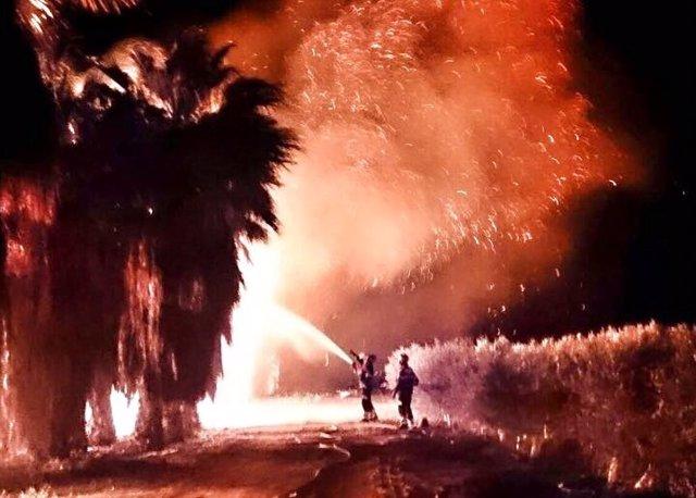 Incendio de dos huertos de Palmeras en Elche