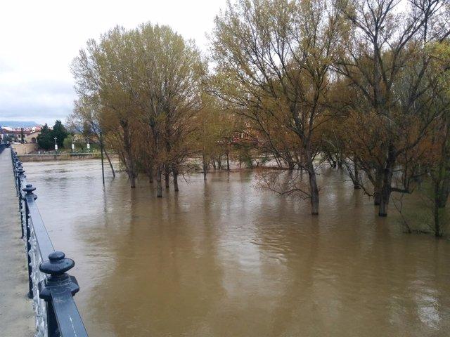 El soto inundable del Ebro, lleno de agua