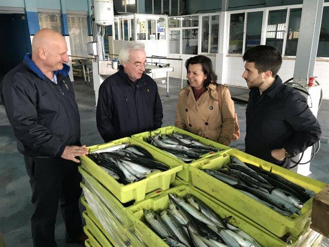 La consejera María Jesús Alvarez visita la cofradia de pescadores de Cudillero