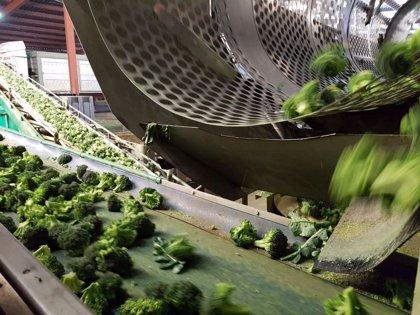 Un millón de brócolis 'inundará' los supermercados de Murcia para promover su consumo entre los niños