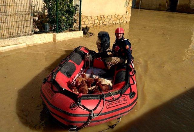 Bomberos rescatan animales de granjas afectadas por la crecida del Ebro.