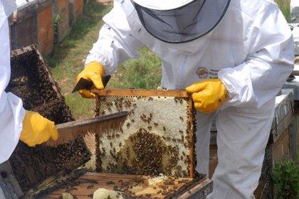 La Asociación Malagueña de Apicultores promueve el primer concurso de mieles de Málaga