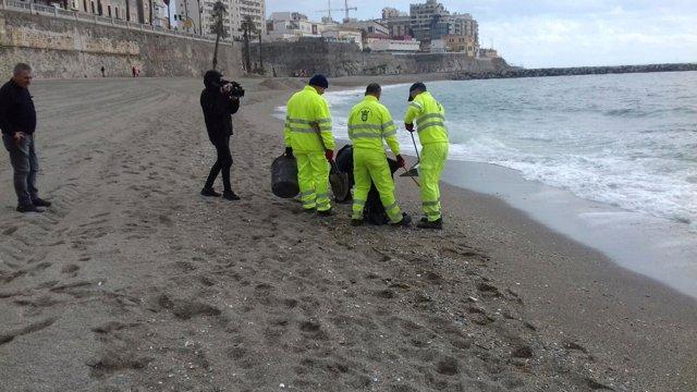 Retirada de medusas en Ceuta