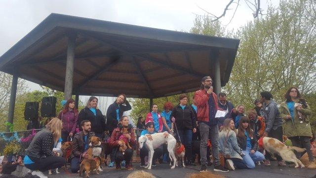 Defensores de los animalesen Mérida con perros abandonados