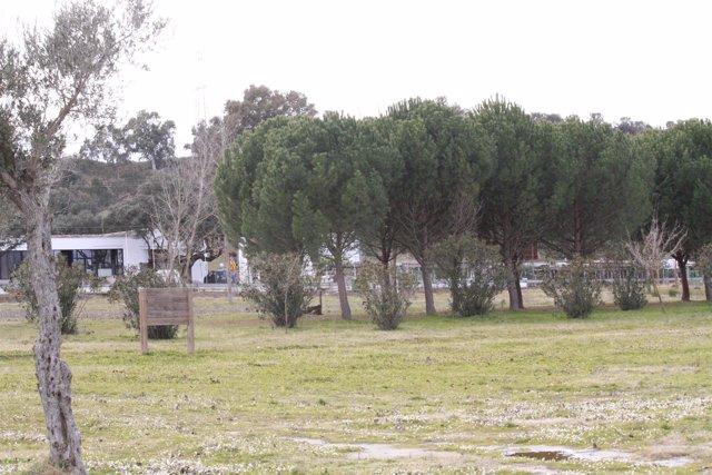 Arboles, campo