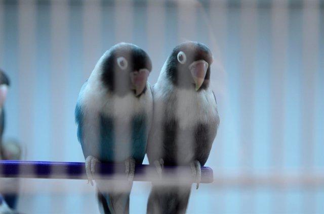 Animales, animal, pájaros, pájaro, ave, aves, pajarillo, periquitos
