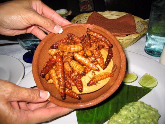 Gusanos emplatados en un restaurante de México