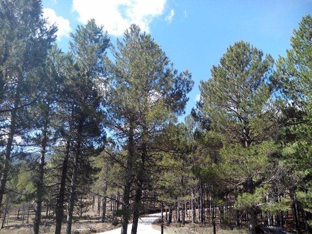 Arboles, bosque, naturaleza, parque, vegetación, buen tiempo, rural, día soleado
