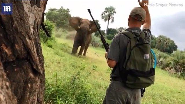 Un guía para la carga de un elefante levantando la mano en safari en Sudáfrica
