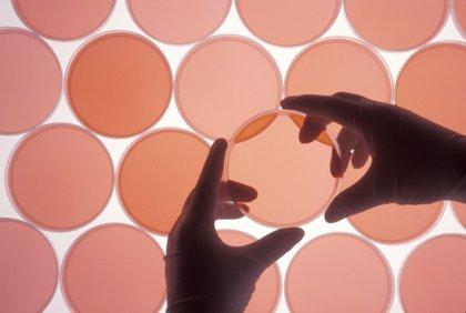 Un fármaco para dolencias metabólicas puede ser efectivo para tratar tumores resistentes en el testículo
