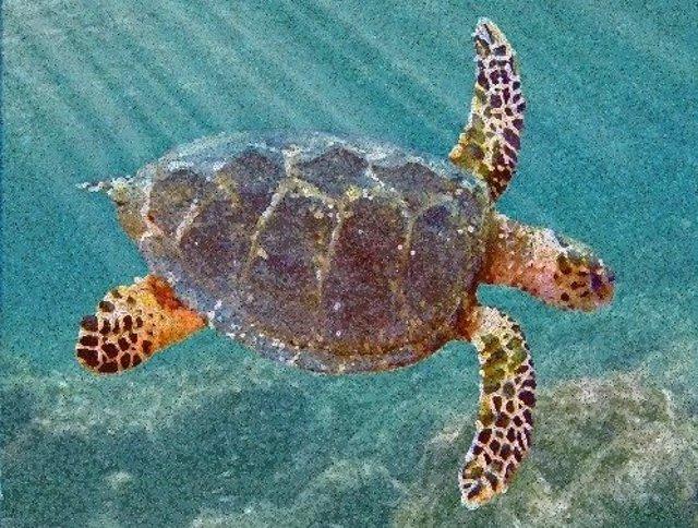 Recreación de la nueva especie extinta de tortuga ancestral
