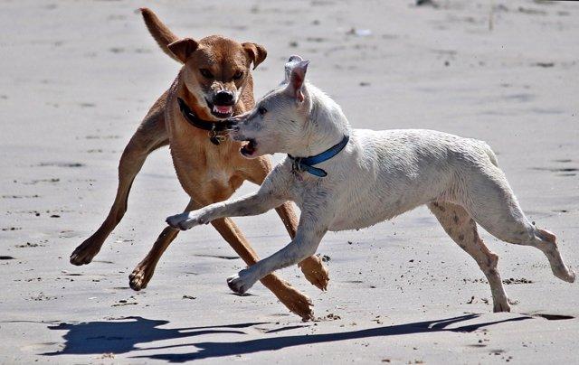 Perros potencialmente peligrosos PPP