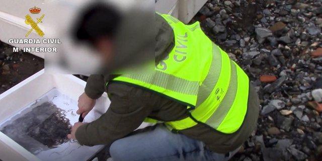 Intervenidos 1126 kilogramos de angulas en el aeropuerto de Barajas