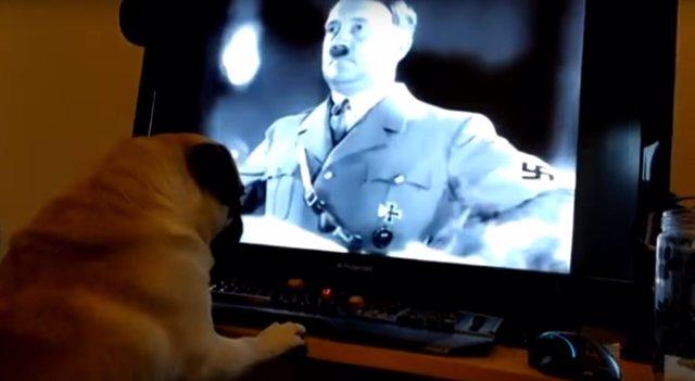 El perro de Mark Meechan, frente a una imagen de Hitler