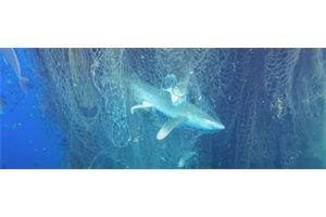 Descubren una 'red fantasma' que mata a peces y tiburones en mitad del mar Caribe