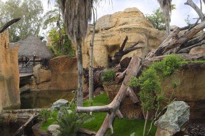 Bioparc Fuengirola emprende camino para traer a Echo, primer miembro del grupo reproductor de gorilas de Costa