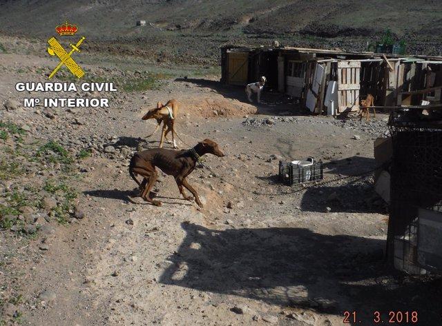 Perros en mal estado