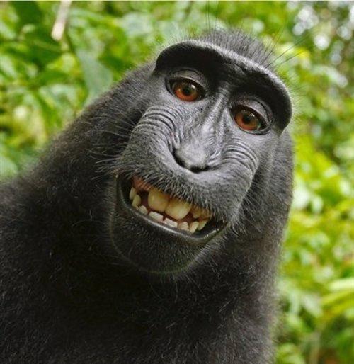 Naruto en el Selfie del mono