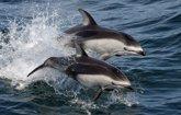 Foto: Así evitan los mamíferos marinos la descompresión del buceador