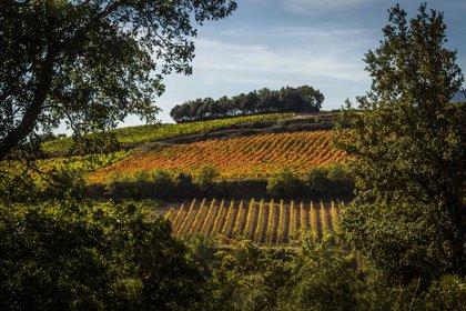 Historia, gastronomía y viñedos, atractivos que ofrece Rioja para disfrutar del Puente de Mayo