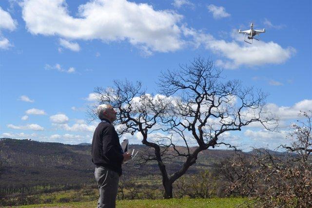 El experto Alfonso San Miguel visita la zona afectada de La Granada de Riotinto.
