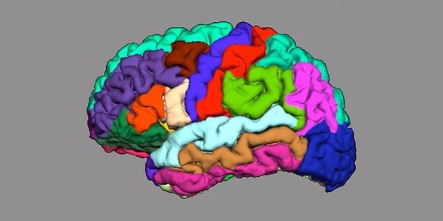 Detectan indicios de psicosis en plegamiento cortical del cerebro