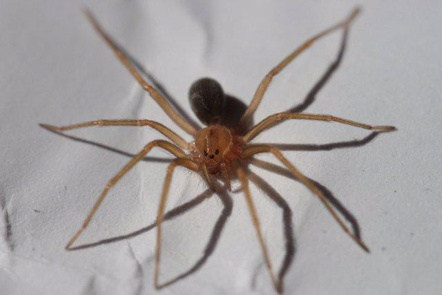 Fallece un bebé de 11 meses por una mordedura de araña en Chiapas