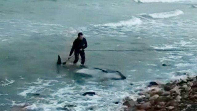 Delfín muerto en aguas de Xilxes