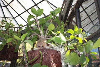 El Jardín Botánico de La Concepción incorpora cerca de 10.000 nuevas plantaciones en 2018