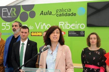 La Xunta destaca el crecimiento de la D.O. Ribeiro, con casi 8,7 millones de litros de vino certificados
