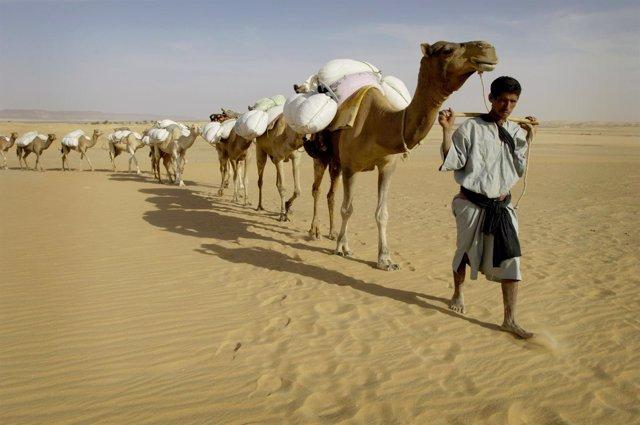 Un hombre con un grupo de camellos en Mauritania