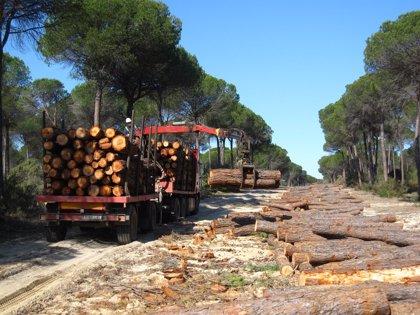 La Junta extrae más de 33.000 toneladas de madera y biomasa de los montes públicos andaluces