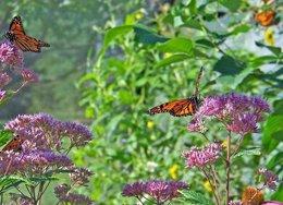 Mariposas en un estudio de la UPM