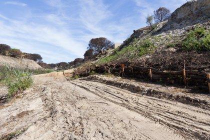 MedioAmbiente.- La Junta destinará dos millones para seguir con la restauración de la zona incendiada de Doñana